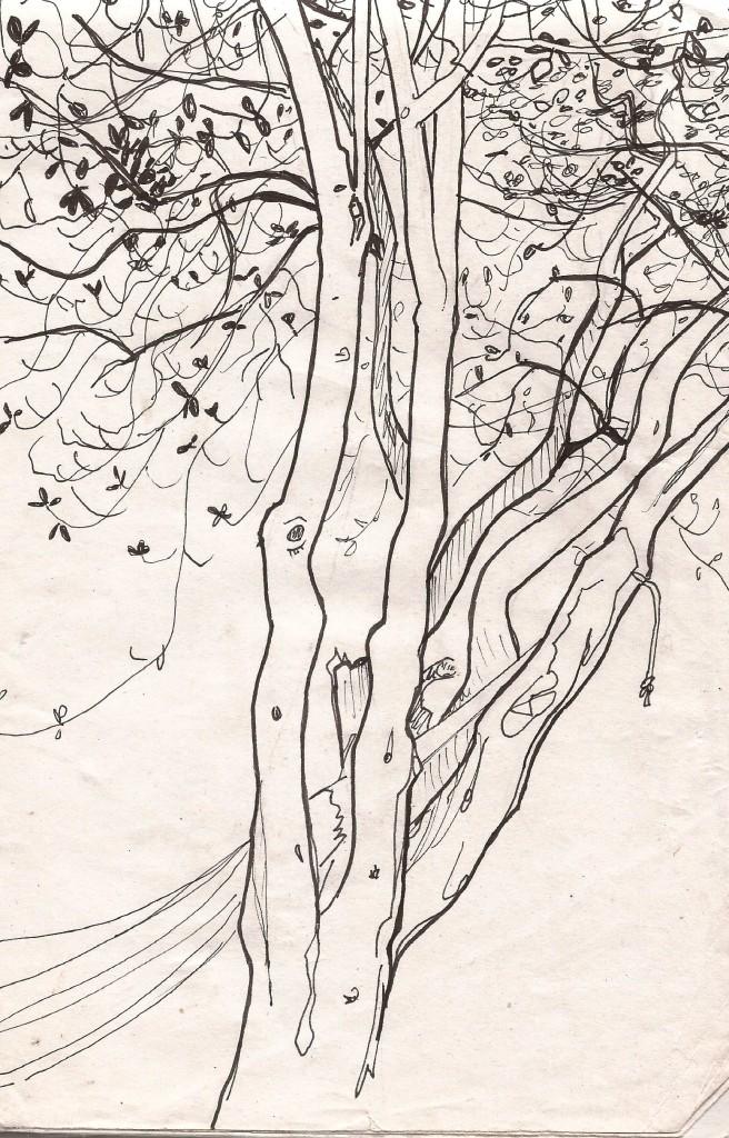 arbres lecques